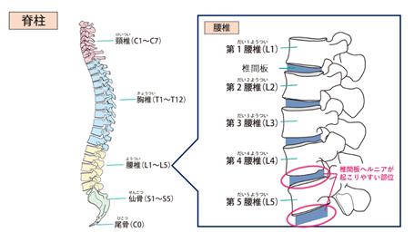 脊椎と腰椎