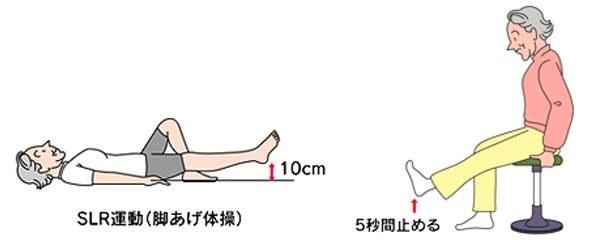 大腿四頭筋の強化例